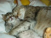 picture-of-cat-and-kitten