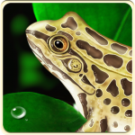 virtual frog dissection, ipad, http://PragmaticMom.com, Pragmatic Mom