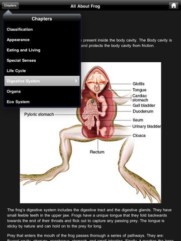 virtual frog dissection, http://PragmaticMom.com, pragmatic Mom