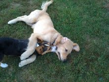 lessons from the dog park applied to my blog, http://PragmaticMom.com, Pragmatic Mom