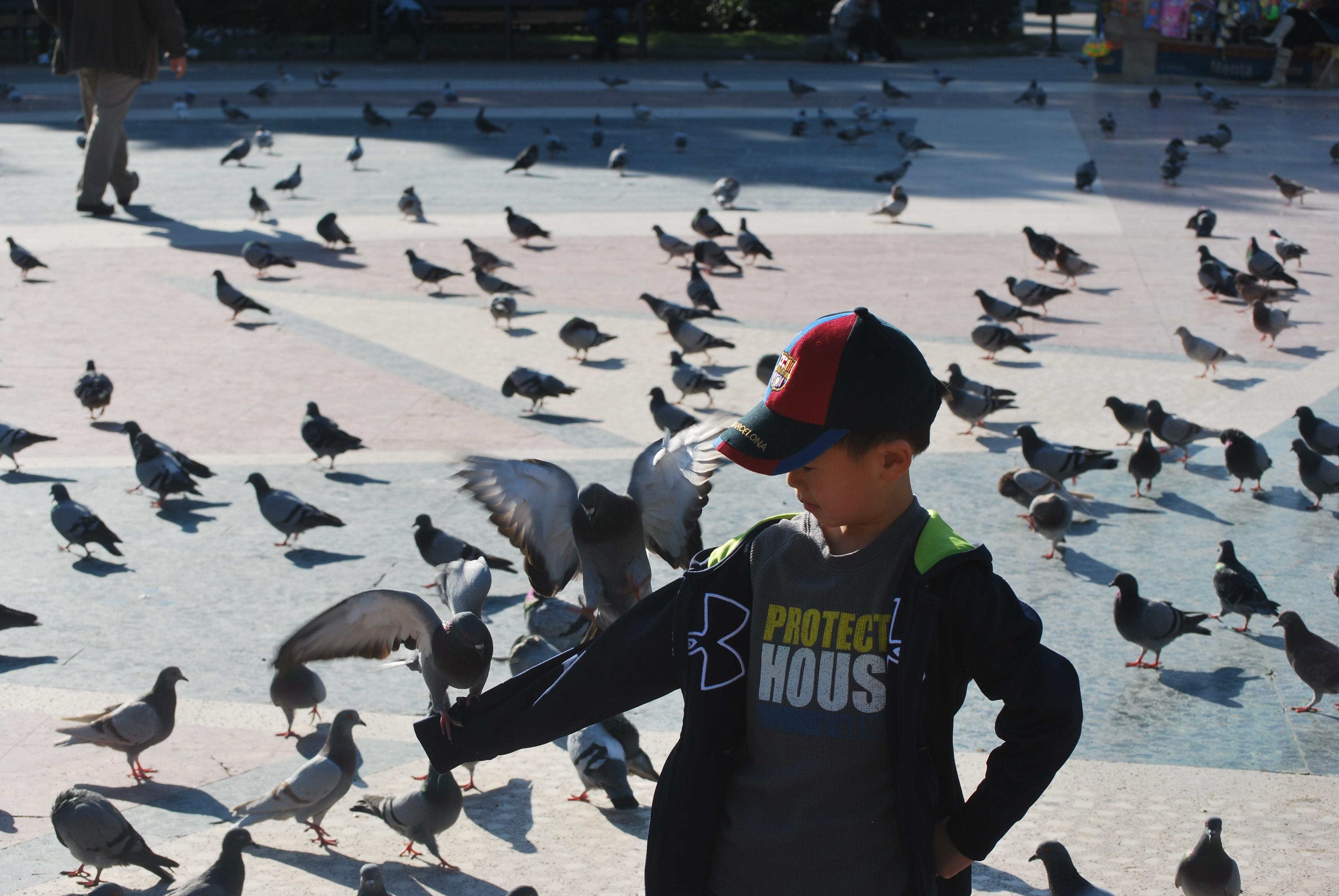 La Rambla, Las Ramblas, feeding pigeons, Barcelona