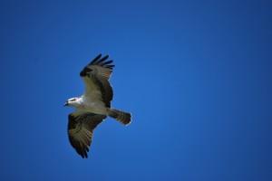 osprey, florida, north captiva
