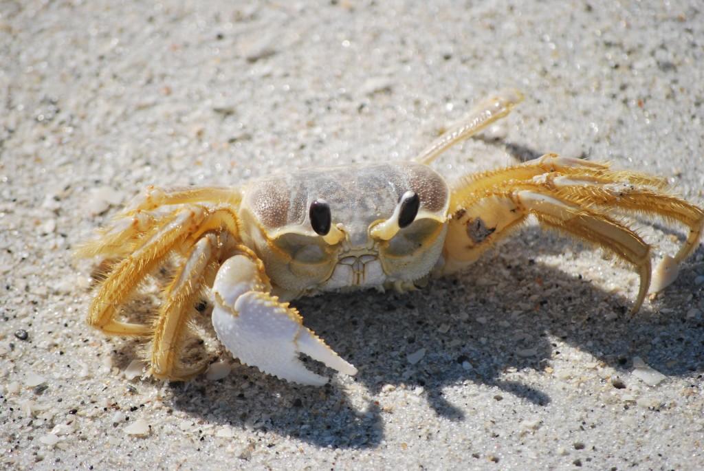 Florida Crab Are Crabs Crabby?