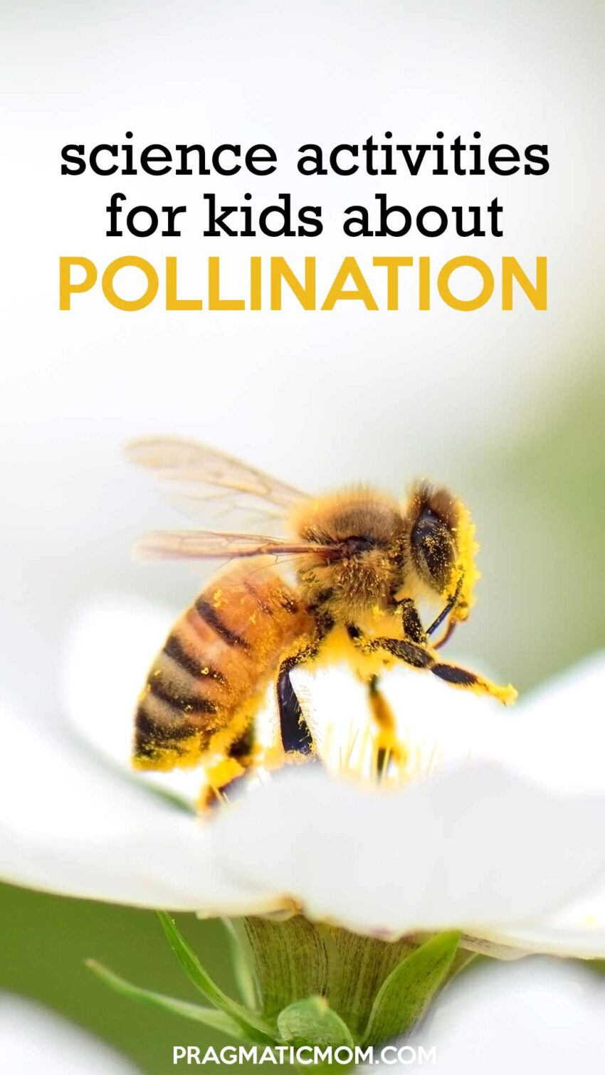 Science Activities for Kids about Pollination