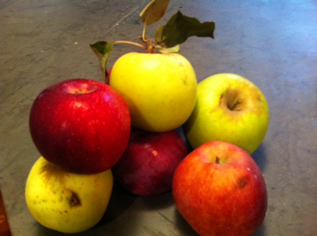 biodiversity of apples, johnny appleseed as bacchus,