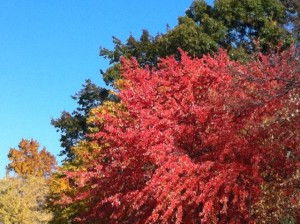 different colors of autumn, New England Fall, fall leaves,