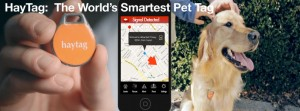 Haytag, keeping pets safe