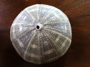 sea urchin shell art project for kids, abstract art projects for kids, art projects for children