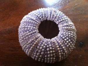 sea urchin shell art project for kids, Arthur Dove