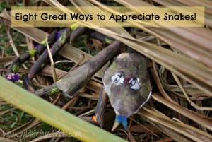 Wildlife fun for kids, 8 great ways to appreciate snakes