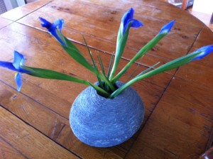 iris flowers, painting irises,