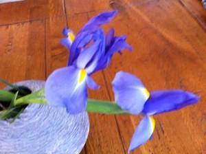 two irises, irises YA book, two sisters