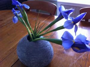irises in bloom, iris book club