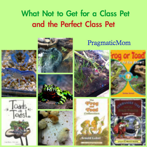 class pet, class pets, perfect class pet, what not to get as class pet