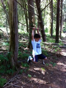 a stick is a climbing tree