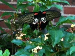 Butterfly Garden, MOS, Museum Of Science Boston,