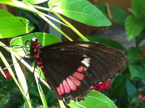 butterfly garden, MOS, Museum of Science Boston,
