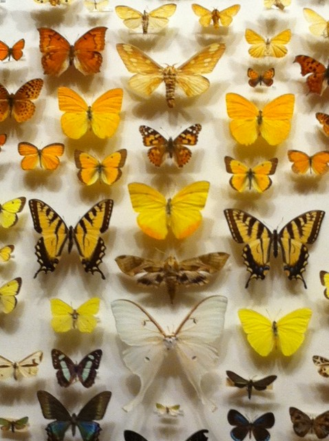 Merveilleux Butterfly Garden, MOS, Museum Of Science Boston,