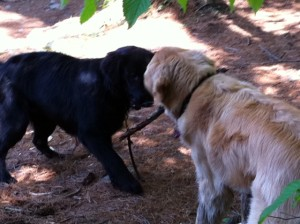 a stick is a tug of war game