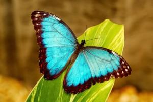bluemorphoz