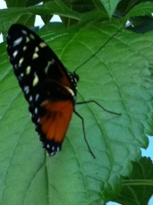 butterfly garden exhibit