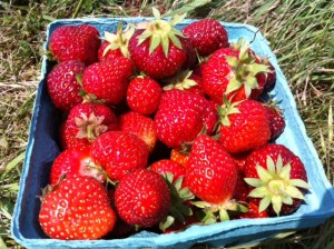 strawberry picking, Father's Day traditions,
