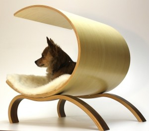 modern and expensive dog bed