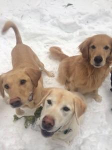 Febreze stinky dogs