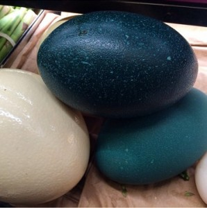 Ostrich and Emu Eggs sold at Whole Foods Market