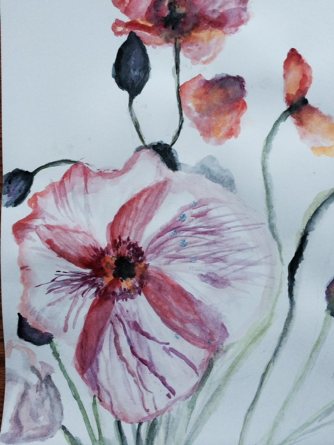 Mia Wenjen watercolor poppy