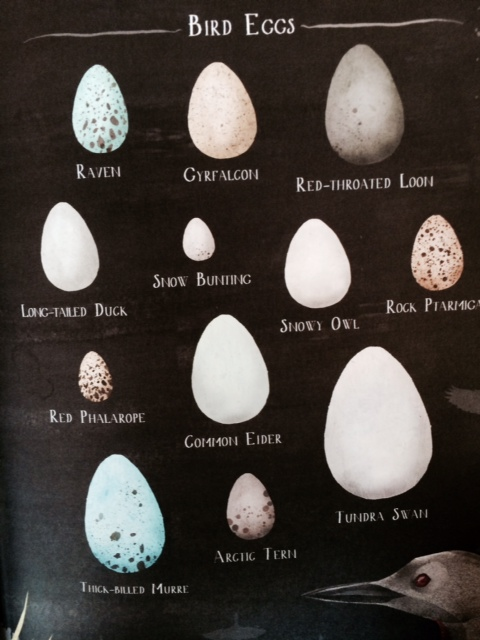 A Children's Guide to Arctic Birds eggs