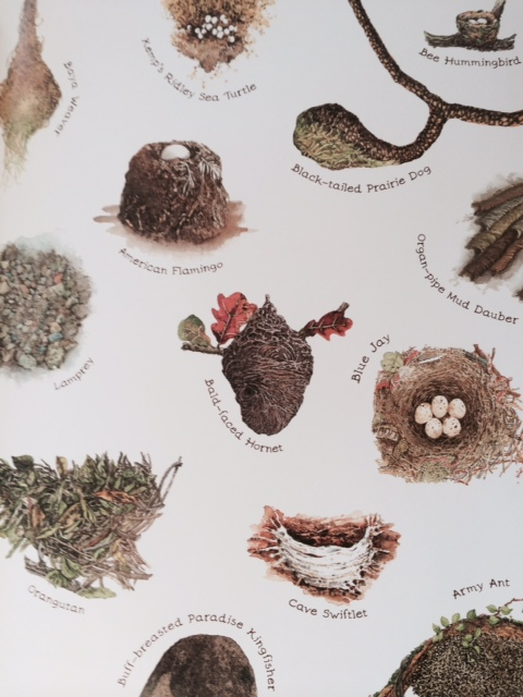 A Nest is Noisy by Dianna Hutts Aston and Sylvia Long