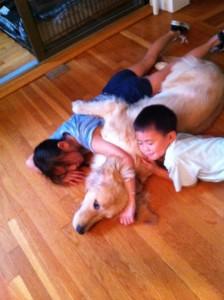 Golden Retrievers are best family pet