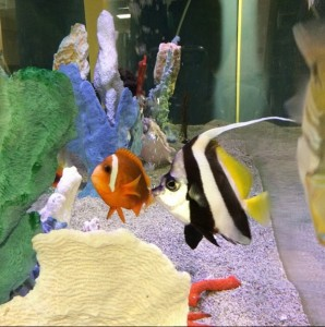 fish tank at Boston Children's Hospital Finding Nemo cast