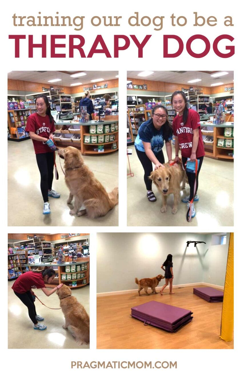 Training Our Dog to Be a Therapy Dog