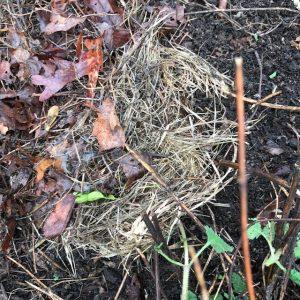 baby bunny nest
