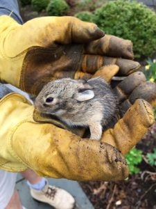 runaway baby bunny