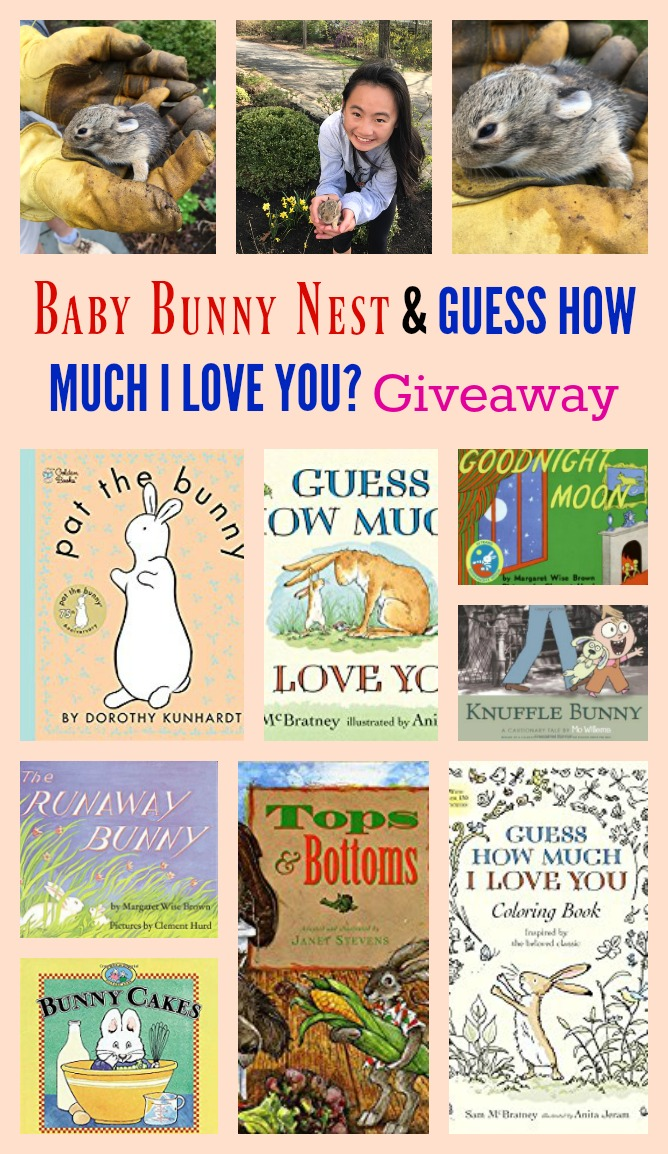 Baby Bunny Nest in Our Yard & GUESS HOW MUCH I LOVE YOU? Giveaway