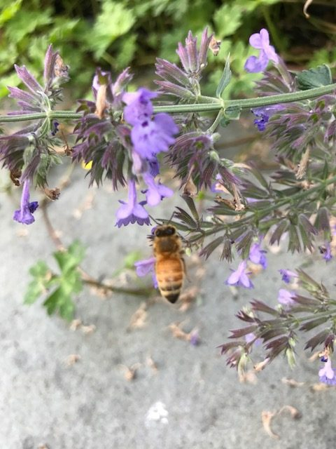 learning about bees: vocabulary