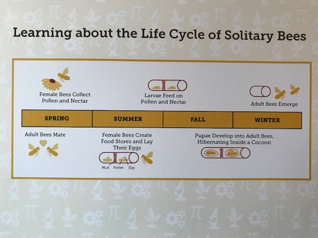 Life Cycle of Solitary Bees