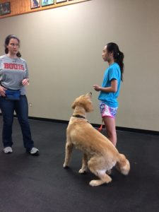 dog therapy test training