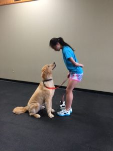 training dog as therapy dog