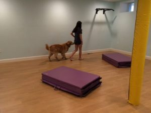 therapy dog test and training