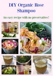 DIY Organic Rose Shampoo