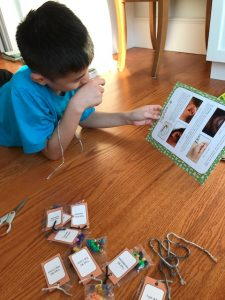 gene science project for kids