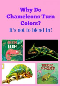 Why Do Chameleons Turn Colors? It's not to blend in!