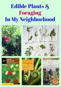 Edible Plants & Foraging In My Neighborhood