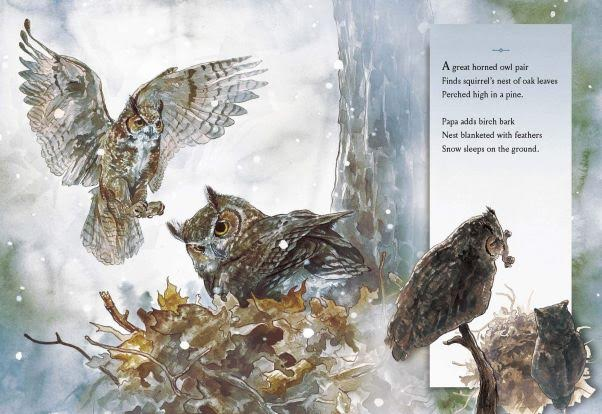 Whoo-ku Haiku: A Great Horned Owl Story interior page