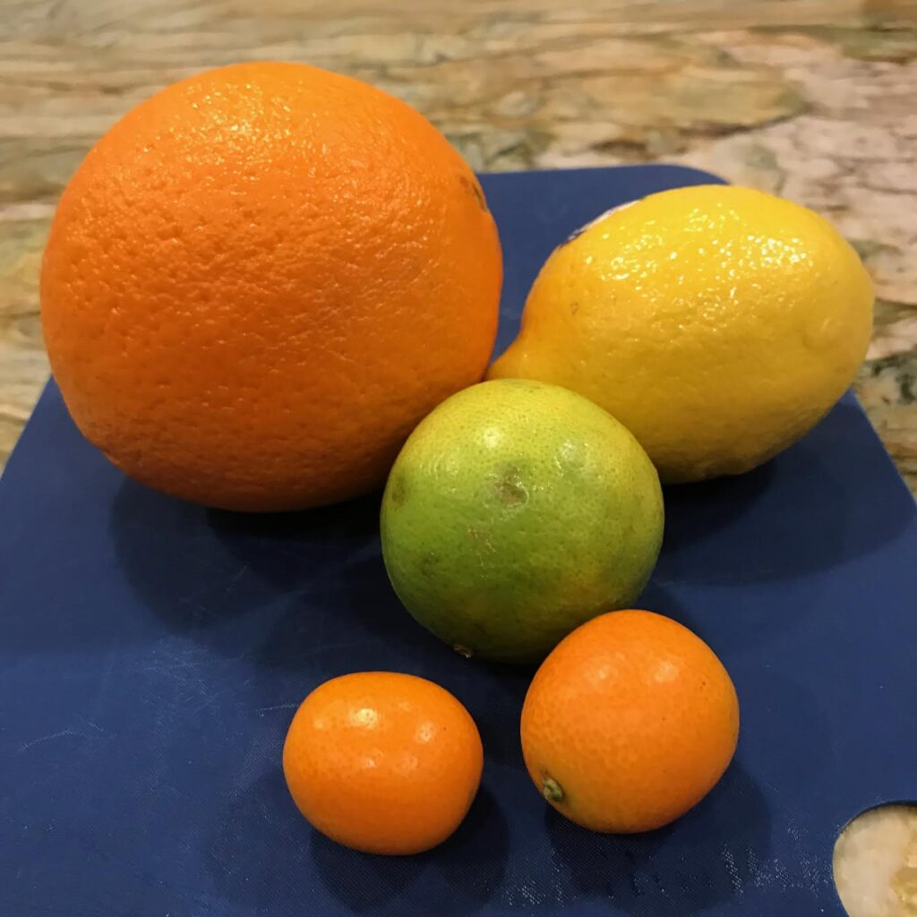 size of kumquat compared to other citrus